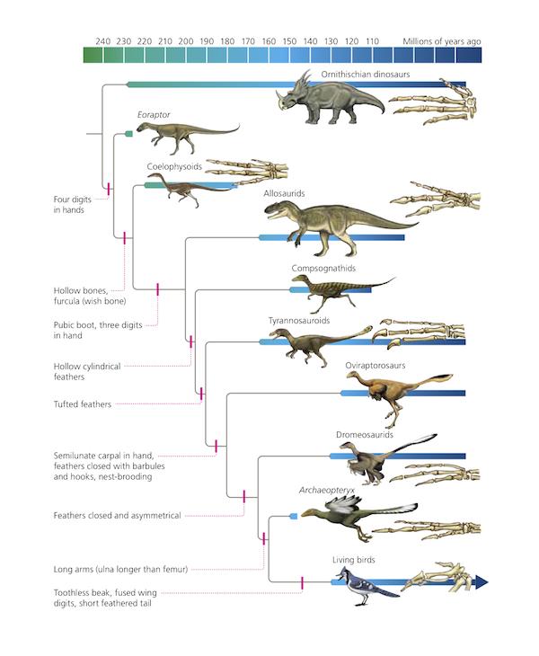 dinosaurs-birds